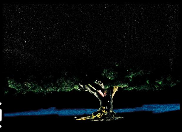 Albero Cosmico, 2009, fotografia manuale a lunga esposizione, stampa inkjet, cm 140x194. Pezzo unico.