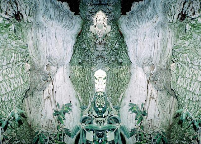 "Carola Bonfili, ""Multiverse Tree"""