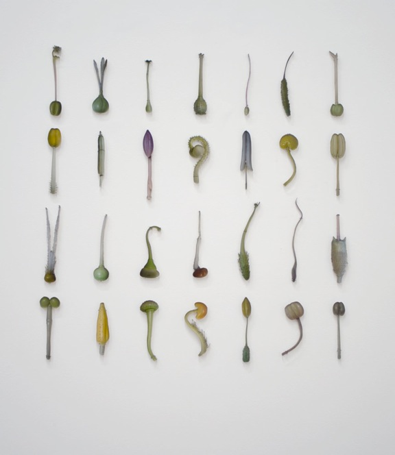 Andrea Frank, Pistils and Stamen, wall installation cm 70x70, 28 pezzi, ciascuno Laser-cut Sandwich Mounted Archival Pigment Prints, 2012