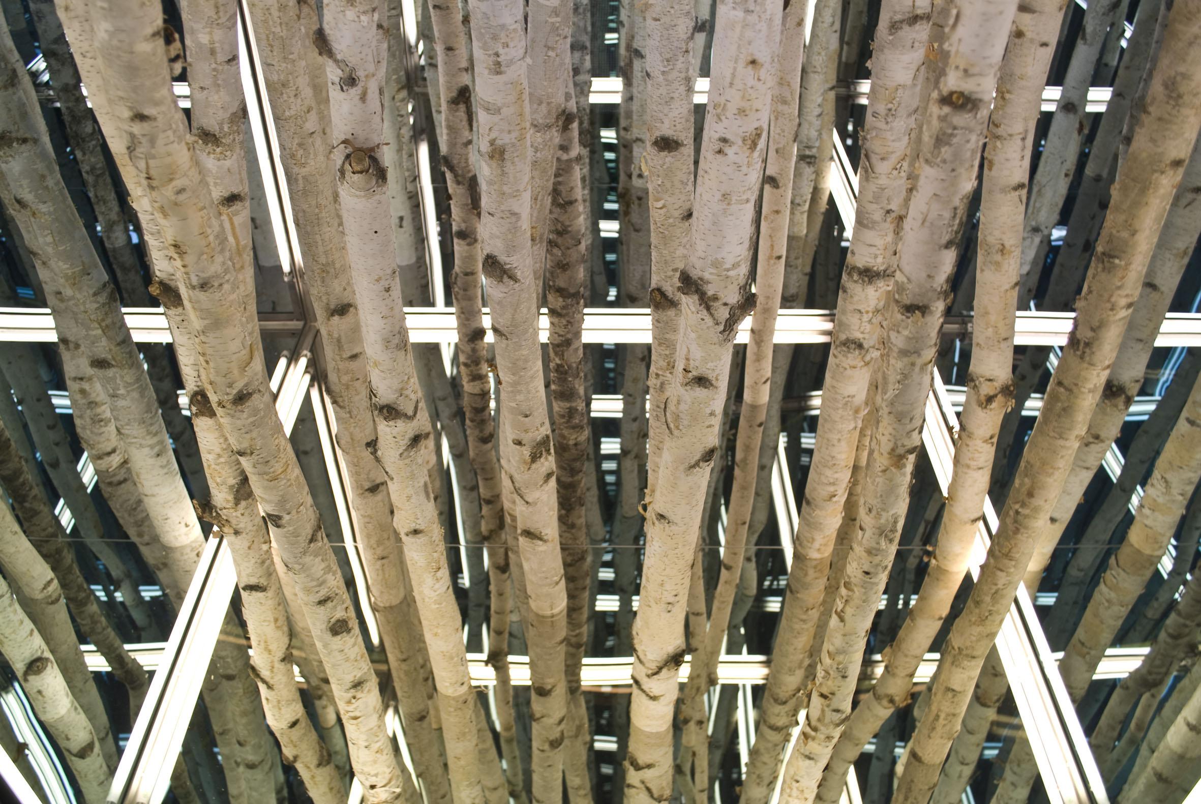 Antony James, Birch cube (particolare), 2011 betulle, alluminio, vetro, luci al led, cm 100x100x100, Courtesy dell'artista e Brand New Gallery, Milano