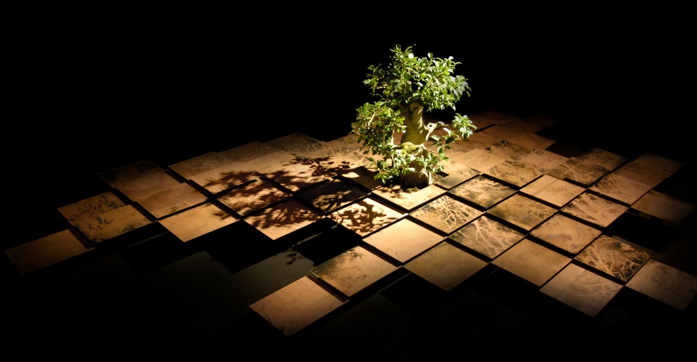 Federico Gori, Von, incisioni e ossidazioni naturali su rame, bonsai (ficus), legno, dimensioni ambientali, 2011
