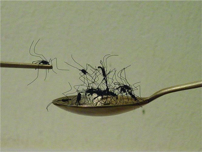 Installazione di Daeyoung Kang, Fabbrica di Zanzare 2012
