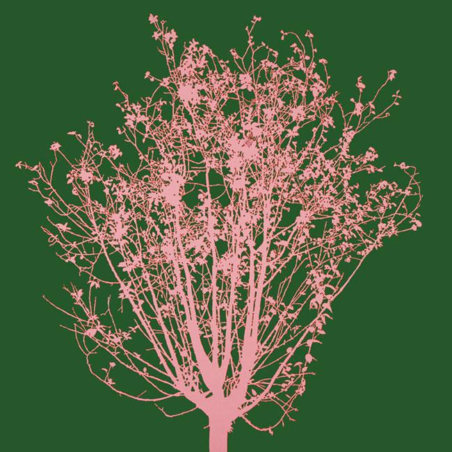 Fernando De Filippi, Vento che parli con voce leggera di foglie, acrilico su tela, cm 100x100