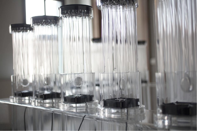 Tamara Repetto, Anosmia, installazione multisensoriale sonoro-olfattiva, 2012, plexiglas, bacchette di vetro, ventole, cialde olfattive, cavo, misure variabili.