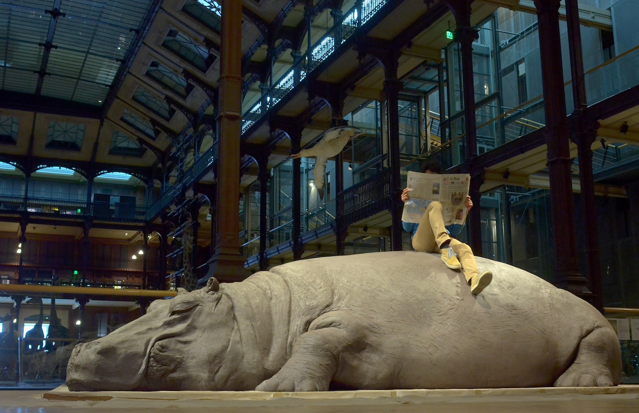 Allora & Calzadilla Hope Hippo, 2005 Installazione e performance Veduta dell'allestimento al Muséum national d'Histoire naturelle, Parigi, 2013 Copyright Allora & Calzadilla Courtesy Galerie Chantal Crousel, Paris; Barbara Gladstone Gallery, New York and Brussels; Lisson Gallery, London, Milano, New York Foto: Vincent Pontet