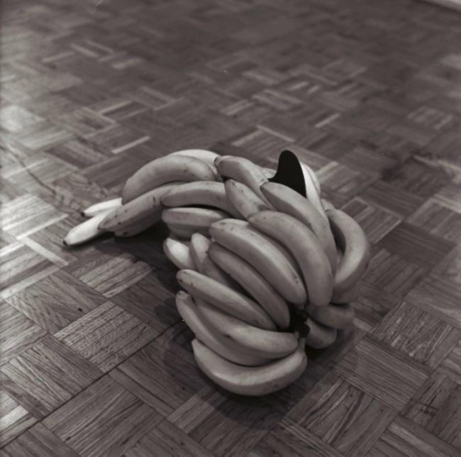 Graziano Folata, Shark Bananas, 2013. Banane, pinnetta da surf in polipropilene isotattico. Dimensioni variabili. Courtesy l'artista e Galleria Massimodeluca