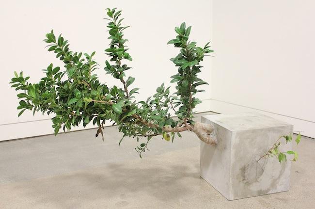 Andre Woodward Just Out of Reach - 2012  Cemento e Ficus, 76,2 x 127 x 55,8 cm / Cement and Ficus Courtesy Studio la Città - Verona