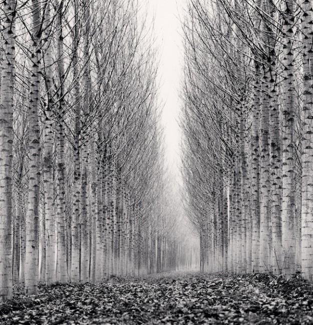 MICHAEL KENNA, Corridor of Leaves, Guastalla, Emilia Romagna, Italy, 2006, cm.19x19, ed. 41/45