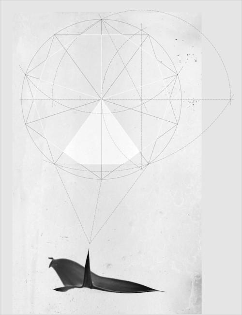 Michele Guido, encephalortus horridus genera pentagono della menancolia _2012/2014 _b/w print with silver salt (Ilfor Multigrade IV FB), dibond, silk-screen printing on glass _cm 50 x 65 x 7 _ed. 1 + 1 ap  courtesy Galleria Lia Rumma Napoli/ Milano - Galleria z2o   Sara Zanin, Roma