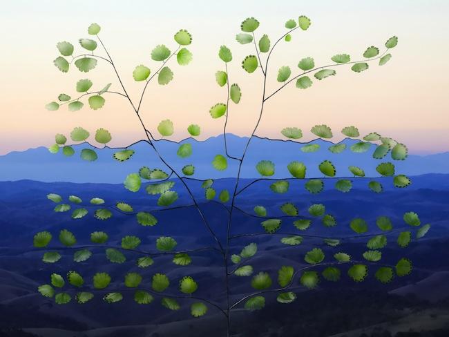 A Samambaia dos Mares #1 2014 lightbox a led cm 30 x 40 x 10, stampa su perspex da compositing 3d Courtesy dell'artista e Galleria Passaggi, Pisa