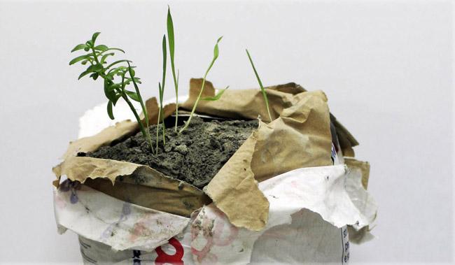 Andrea Francolino, Performance di una pianta