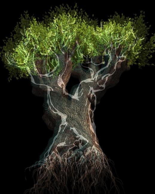 Davide Coltro, Tree H 01