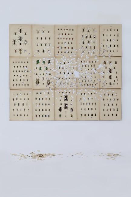Gianluca Quaglia, Coleotteri#4, 2015, intagli su quindici tavole entomologiche di fine '800, 66x76 cm Foto Marcella Savino