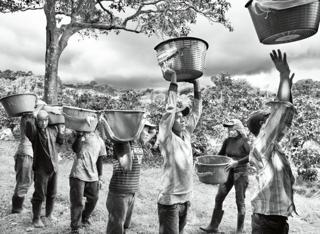 Sebastião Salgado, Profumo di Sogno, Raccoglitori di caffè. Finca la Hilda sulle pendii del vulcano Poas, regione San José. Costa Rica 2013, © Sebastião Salgado/Amazonas Images