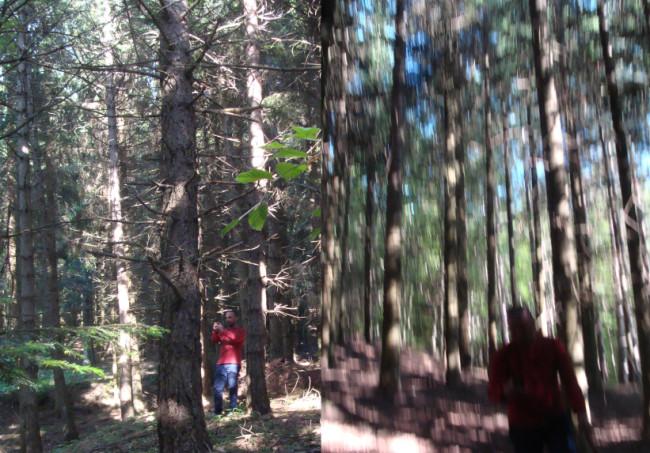 Valico Terminus, Appennino Tosco Emiliano, alberi