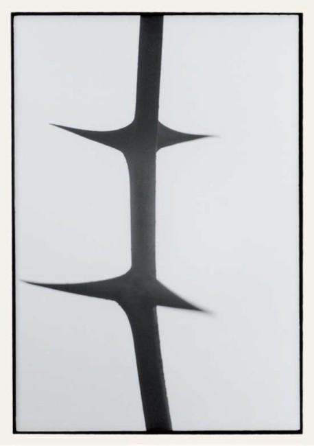 Pino Colla, BN_1967