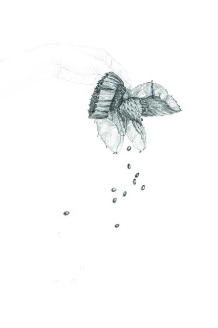 Margherita Leoni, Seminami (particolare), 2012, matita su carta, cm 56x38