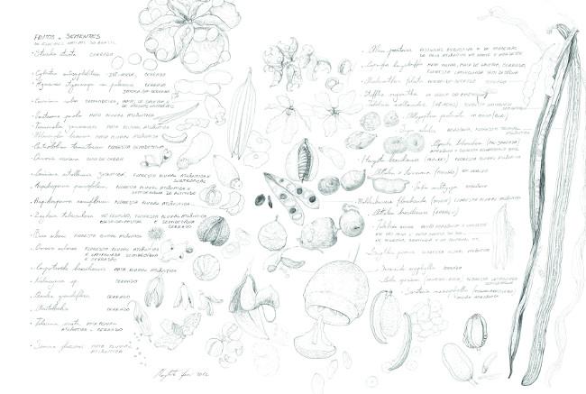 Seminami, 2012, matita su carta, cm 38x56