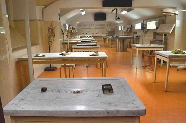 Tamara Ferioli, Succurrere Vitae, Museo delle Cere Anatomiche, Bologna