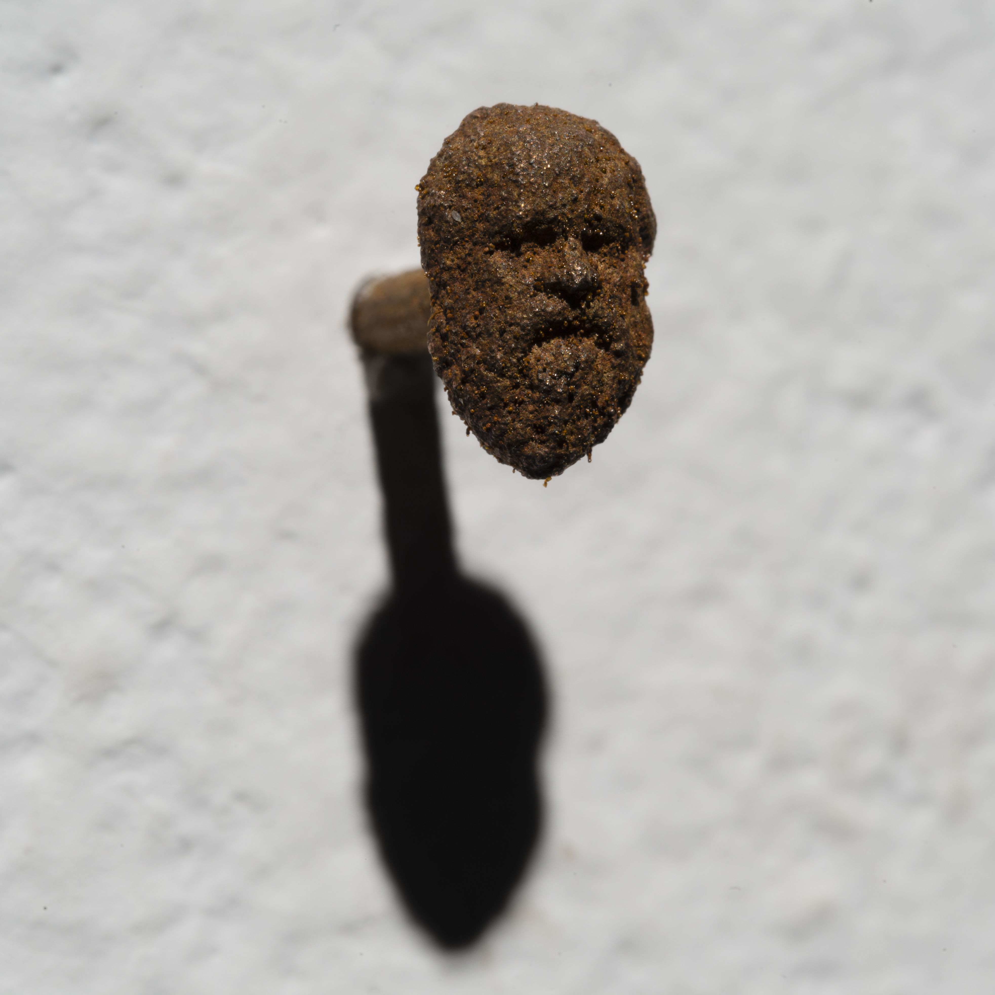 Hilario Isola, Socrate 2