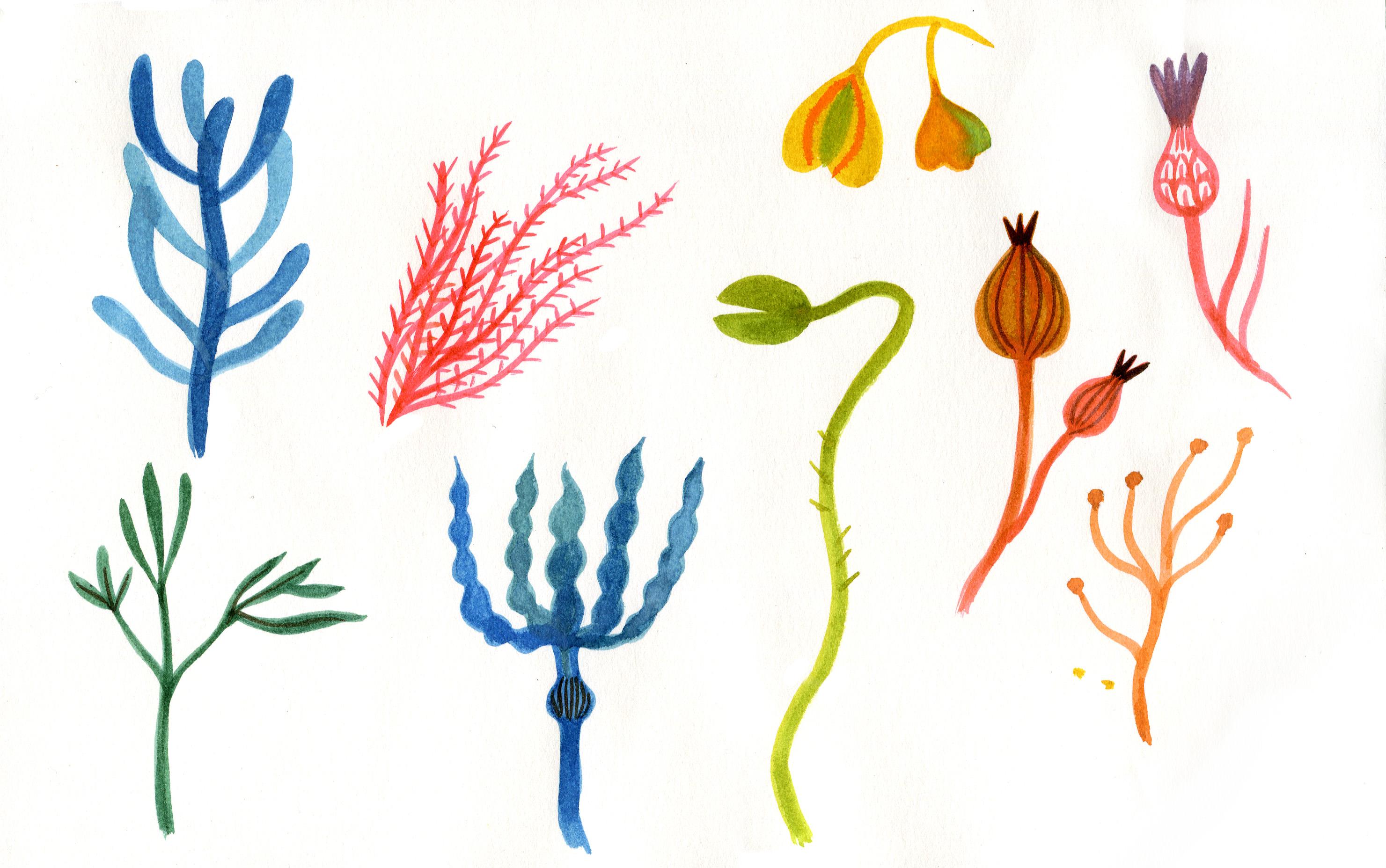 Anne Laval, Plantes