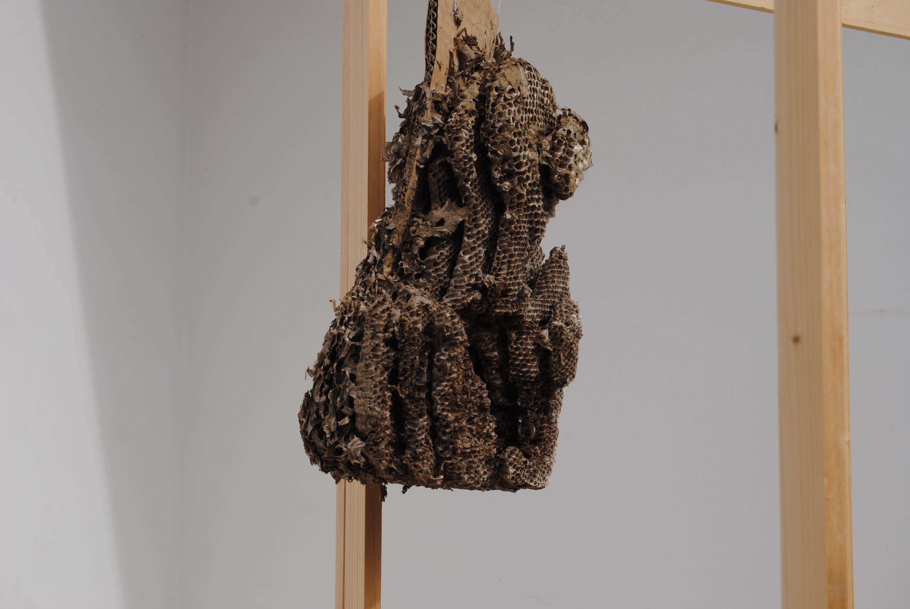 """Giulio Ribezzo, """"Relazioni"""", carta, cemento e materiali lignei di risulta, alveare, 2016"""