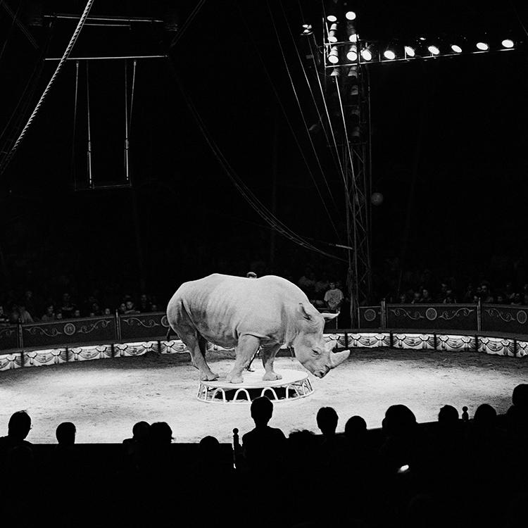 Jože Suhadolnik, Cirkus,1999