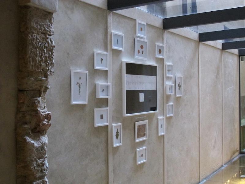 Andrea Mori, Errando 16 giorni Laverna Poggiobustone, 2007, 1 mappa emozionale, 16 cornici contenti campioni vegetali, dimensioni variabili