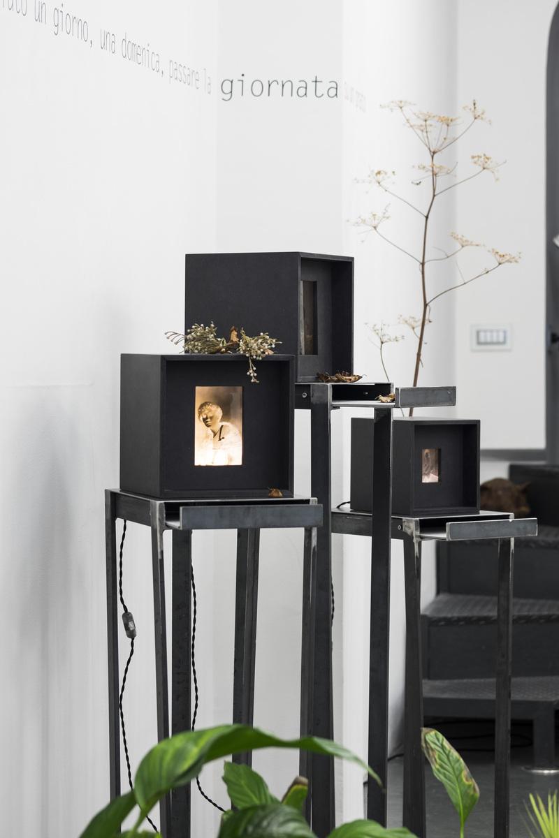 Alessandra Calò, Secret Garden tecnica mista, ferro, legno, lastre negative, arbusti 120x30