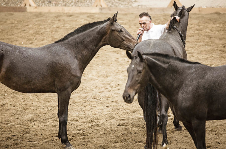 Saga, 2015 Foto: Andrea Grassi