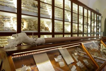 Nico Vacellari Bastard of Disguise, 2006, scultura, gesso, metallo, legno Veduta Accademia dei Fisiocritici, Siena Courtesy AGIVERONA Collection, Galleria Monitor, Roma PH. Michele Alberto Sereni