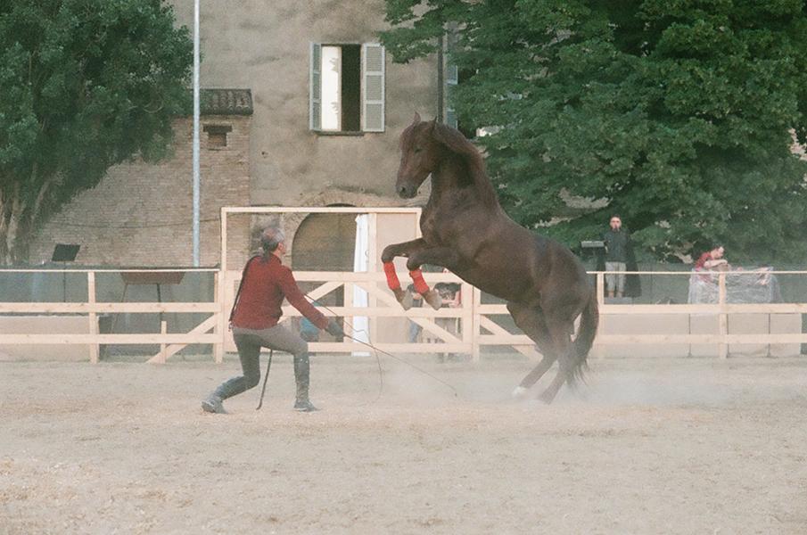 """Saga. """"Allevare con cura. addestrare con sapienza"""". C'è un arcaico patto che antichi uomini e antichi cavalli stipularono nella notte dei tempi. Foto: Marco Bolognesi"""