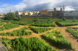 Terzo giardino - Riva dell'Arno, Firenze, Intervento nello spazio pubblico, 2016