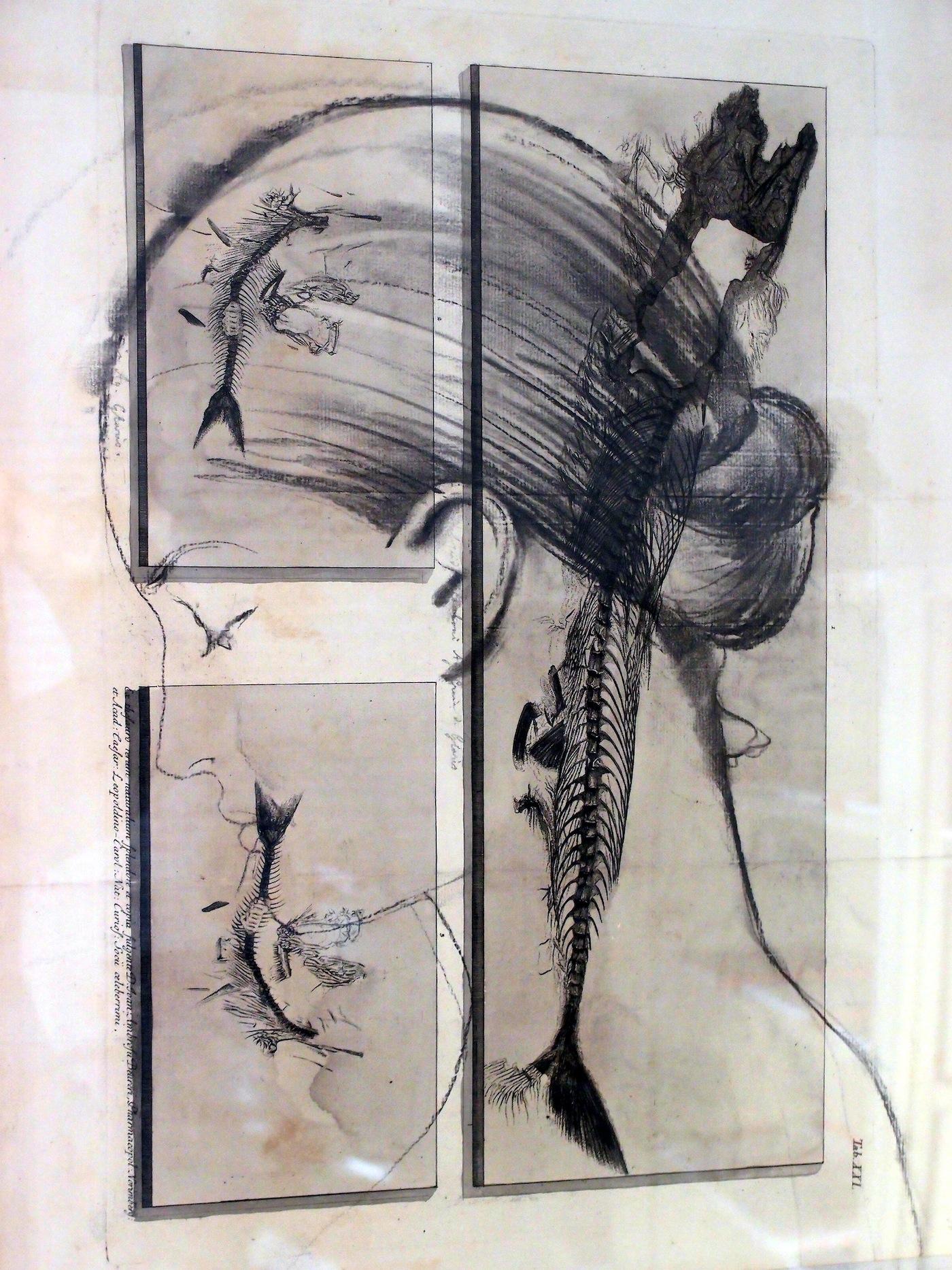 Omar Galliani, OMAR/ROMA/AMOR,2012,11 carboncini su carta antica,cm 55x45
