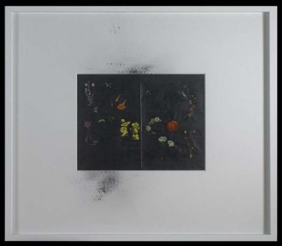 Gianluca Quaglia, Polvere, 2016, tavola botanica di inizio '900, grafite argentea, polvere di grafite, tavola 32x41.5 cm, cornice 73x85 cm