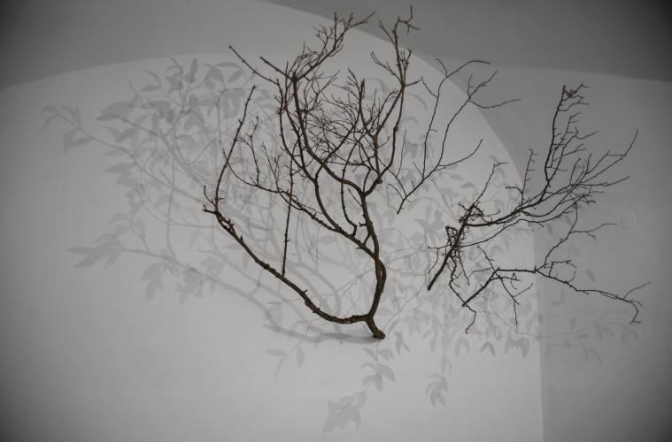 Alessandro Lupi, Tree, 2016 tecnica mista dimensioni variabili. Courtesy Guidi & Schoen, Genova
