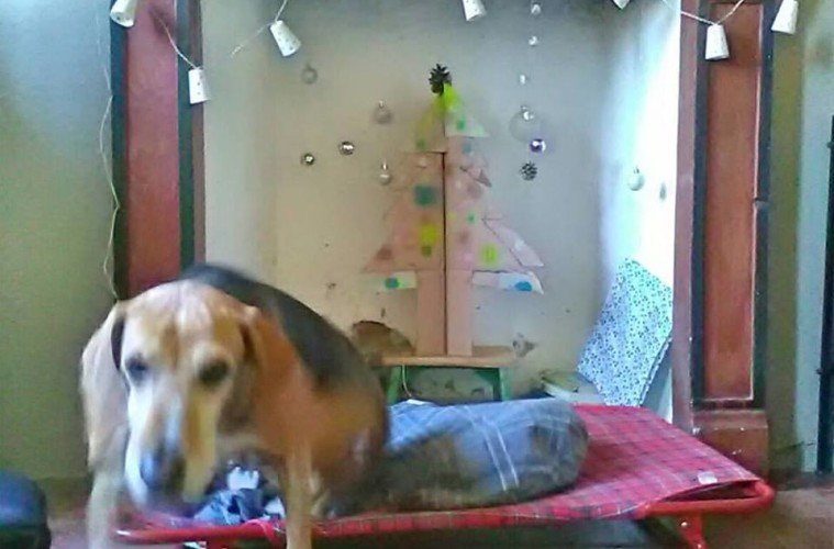 Rocco e l'albero