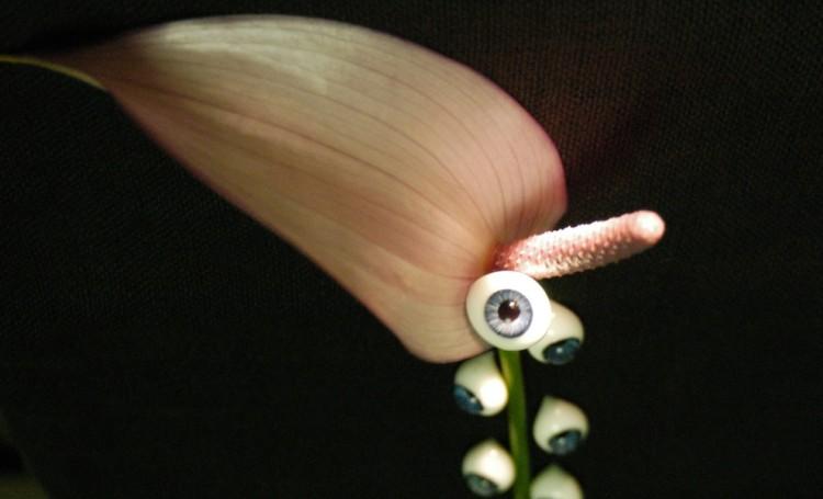 Katsu Ishida, Death flower, 2016, fotografia, 20x60 cm