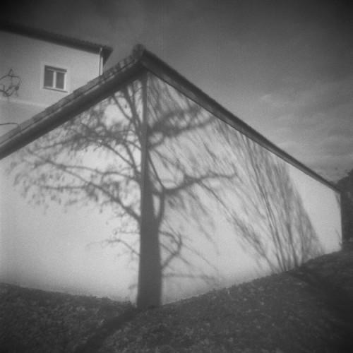 Candido Baldacchino, Albero di Mezzana, 2013, stampa digitale su carta di cotone, 60x60 cm Courtesy Galleria Blanchaert