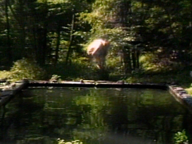 The Reflecting Pool (Vasca riflettente) Bill Viola, 1977-1979, 7'. Videotape, colore, audio monofonico. Prodotto presso WNET/Thirteen Television Laboratory, New York e WXXI-TV Workshop, Rochester, NY. Courtesy Bill Viola Studio