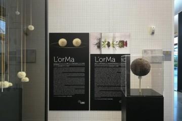 Veduta della mostra L'orMa. Vincitore assoluto Premio Arteam Cup 2016, veduta della mostra, CUBO, Centro Unipol BOlogna – Spazio Arte