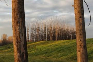 Giuliano Mauri, Cattedrale Vegetale di Lodi Foto di Alessandro Cappella © Associazione Giuliano Mauri