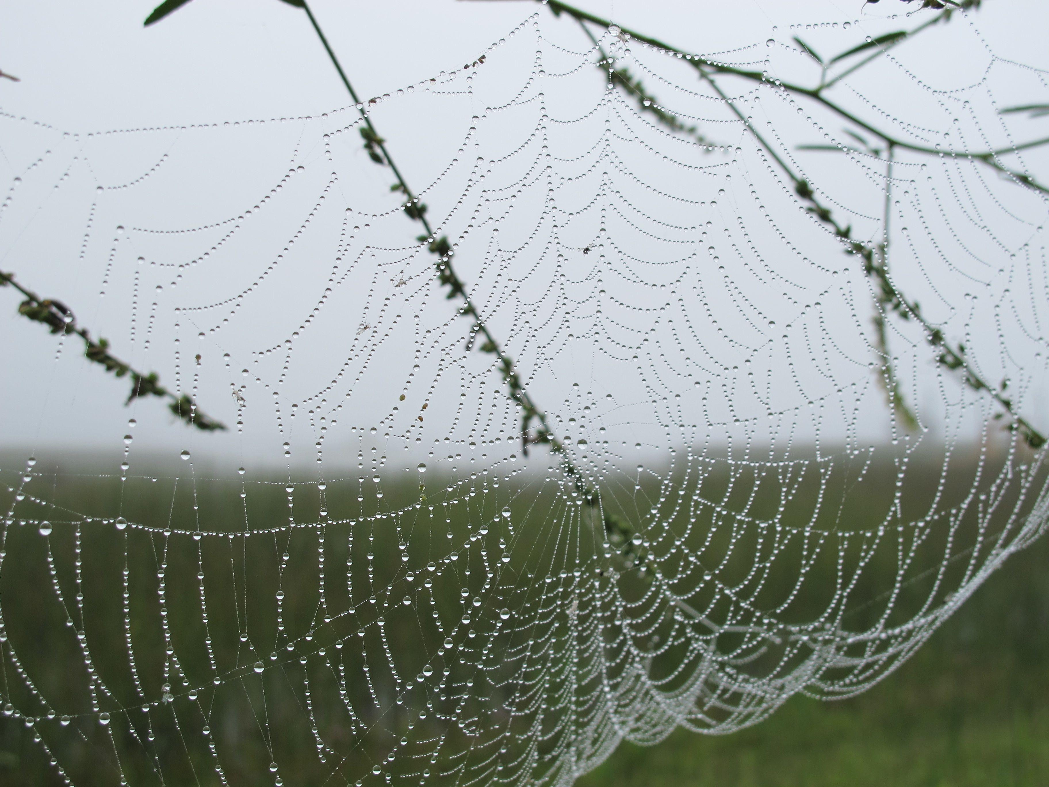Sandra Binion, Spider web, stampa inkjet d'archivio, 2016, 46x61 cm