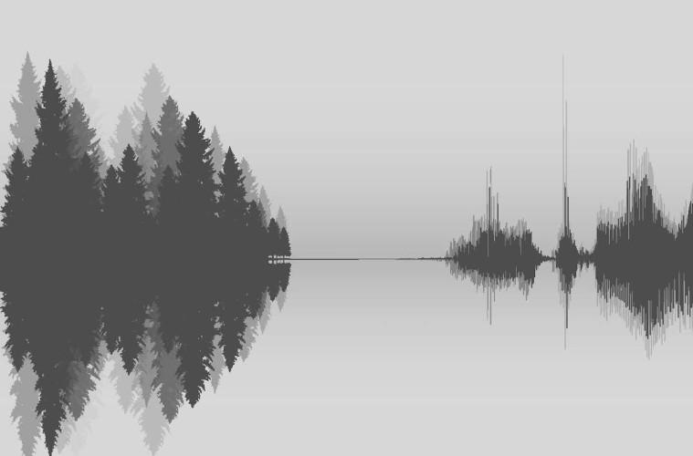 Silenzi d'alberi