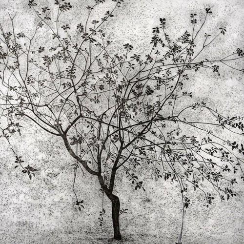 Federica Galli, Il secondo melo, 1959, 34.5x35.8 cm