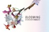 blooming-festival-full-bloom