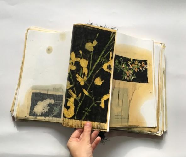 Elena Hamerski (Forlì 1989), Piante medicinali e velenose della flora italiana, 2015-2017, polittico + libro d'artista, olio di lino, pastelli acquerellabili e carbone su carta, dimensioni variabili