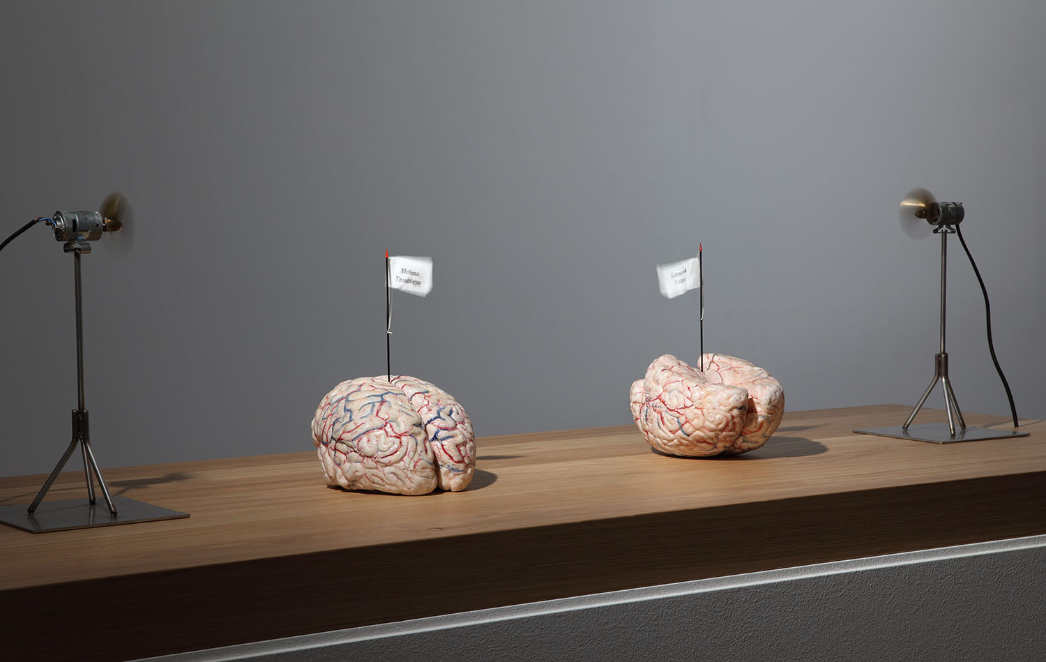 Jan Fabre, The brains of my mother and my father, 2006, silicon, textile, metal, oak, 23x15x21 cm (2 brains), base 110x110x50 cm, motors 29x15.3x14.9 cm Photo Attilio Maranzano © Angelos bvba