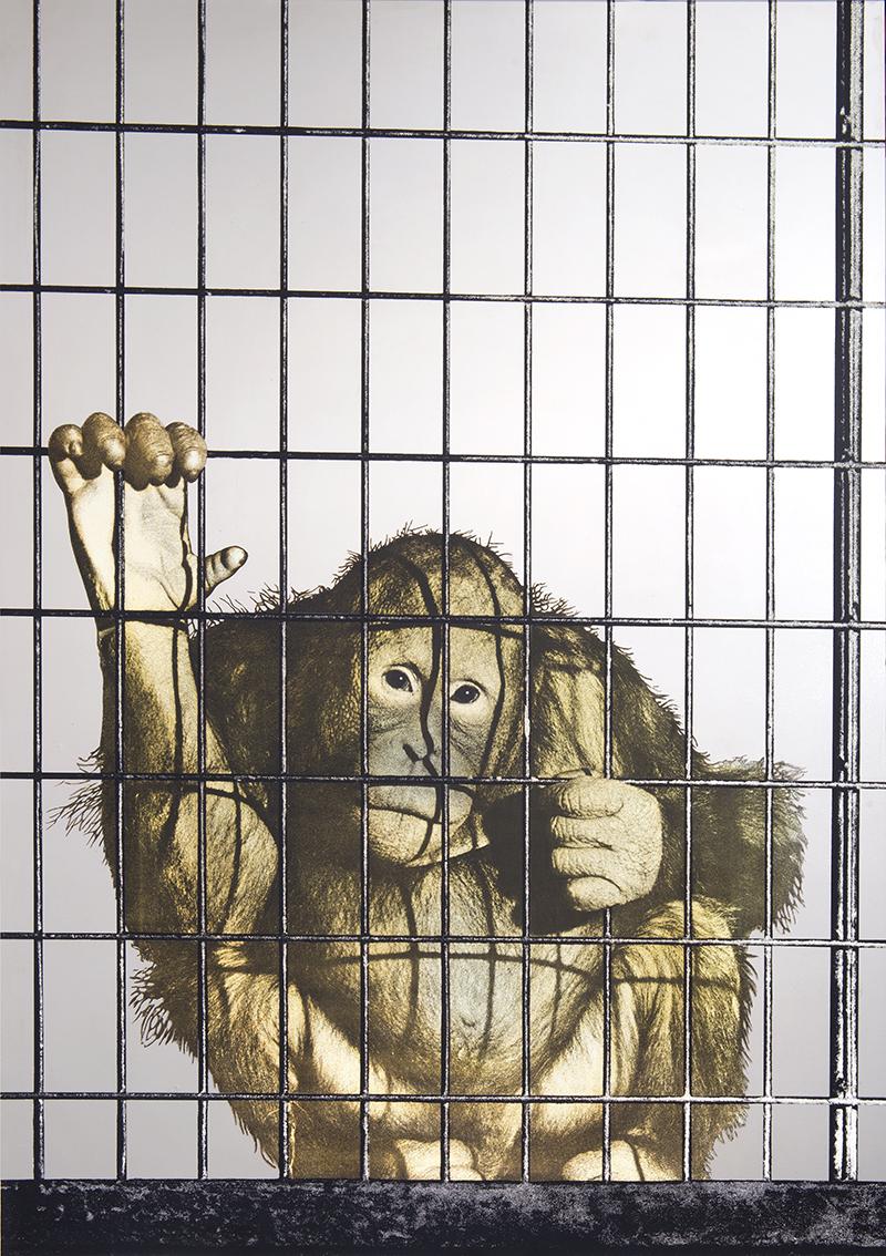 Michelangelo Pistoletto, La scimmia, 1962-73,  serigrafia su acciaio, cm 100x70, Biasutti & Biasutti, Torino