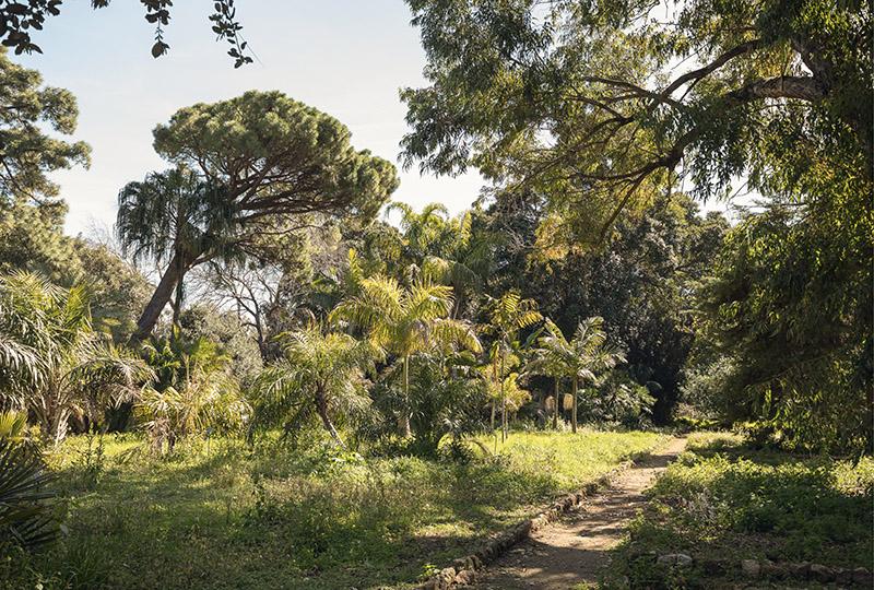 Orto Botanico_Manifesta 12 Palermo Atlas_Photo Delfino Sisto Legnani, 2017, courtesy OMA